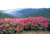 mountain view with pink flowers